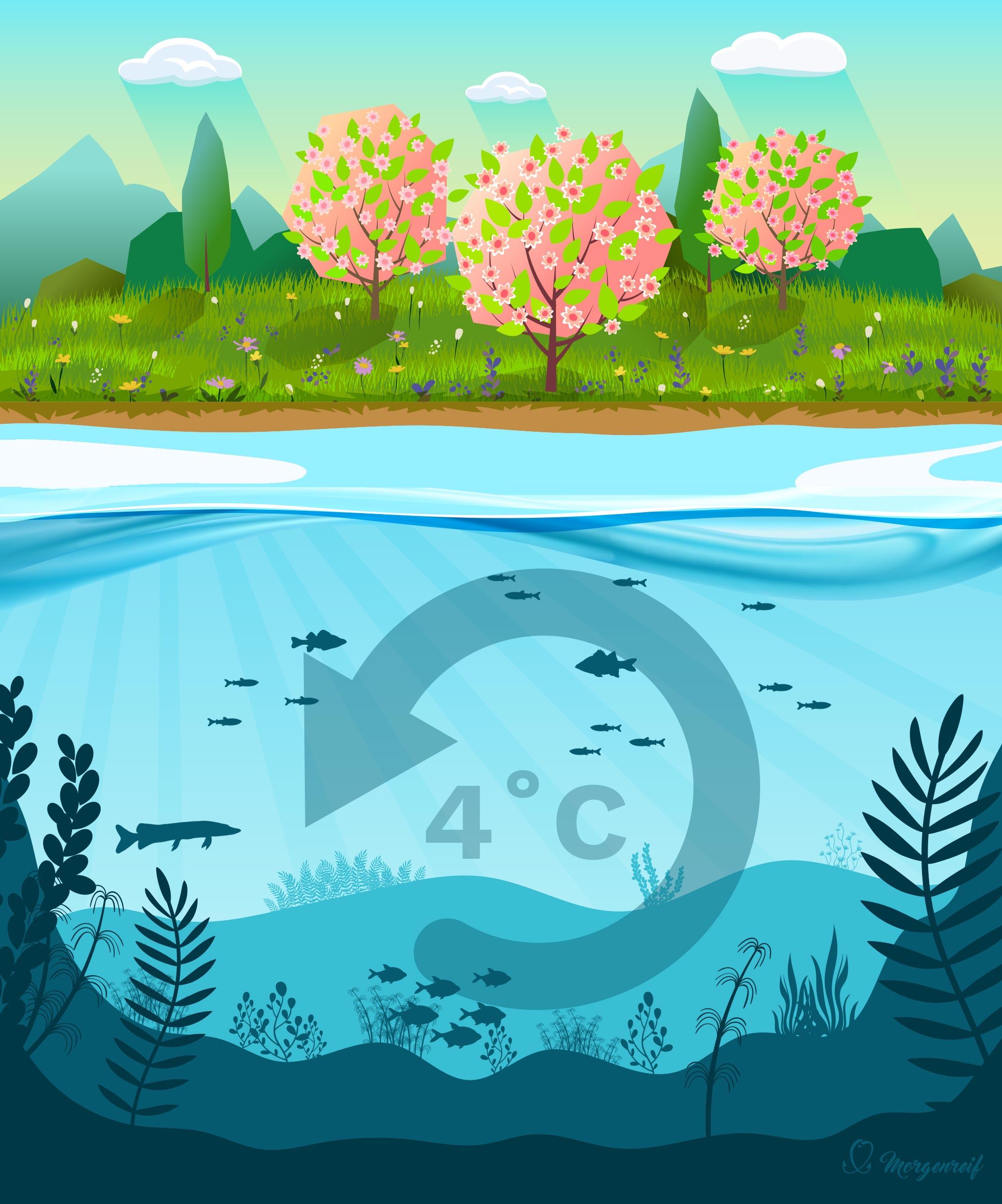 Ein See im Frühling - Gewässerkunde