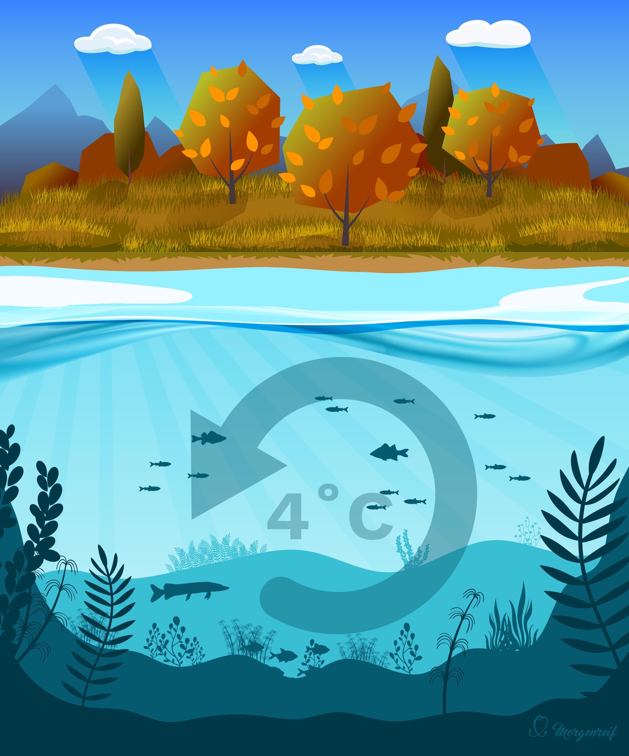 Ein See im Herbst - Gewässerkunde