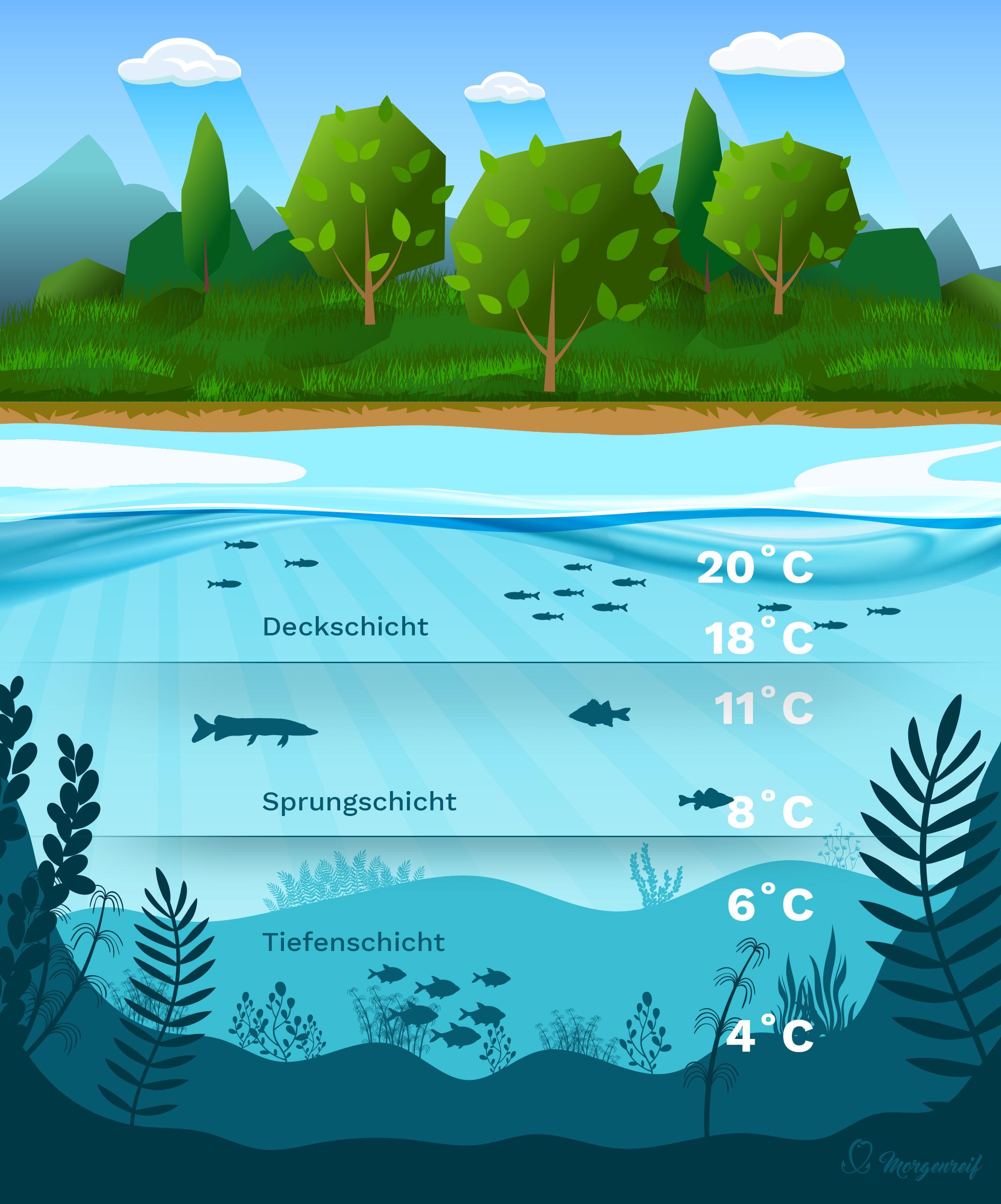 Ein See im Sommer - Gewässerkunde