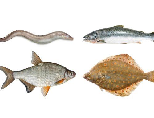 Die vier Formen heimischer Fische  Lucas wird zum Angler · Teil 2