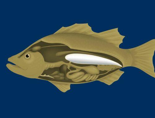 1. Fischkrankheiten 2. Die Schwimmblase  Lucas wird zum Angler · Teil 3