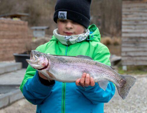Das Seitenlinienorgang und Farbensehen bei Fischen  Wissenswertes